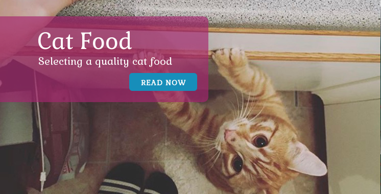 What to look for in a quality cat food