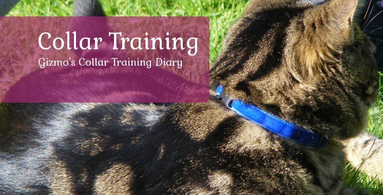 Gizmo's Collar Training Diary