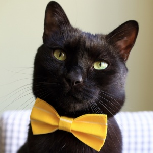 Yellow Stripe Bow Tie