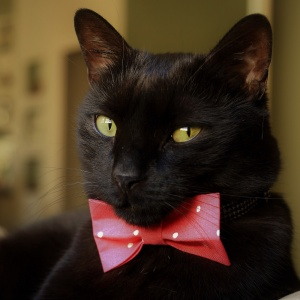 Dark Pink Spotty Cat Bow Tie