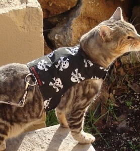 Skull and Crossbones Cat Harness and Lead