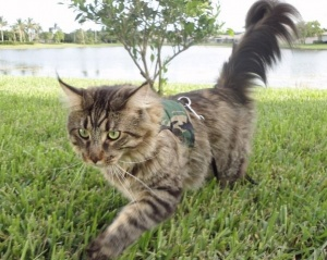 Green Camo Cat Harness and Lead