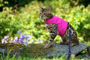 Pink Escape Proof Cat Harness and Lead